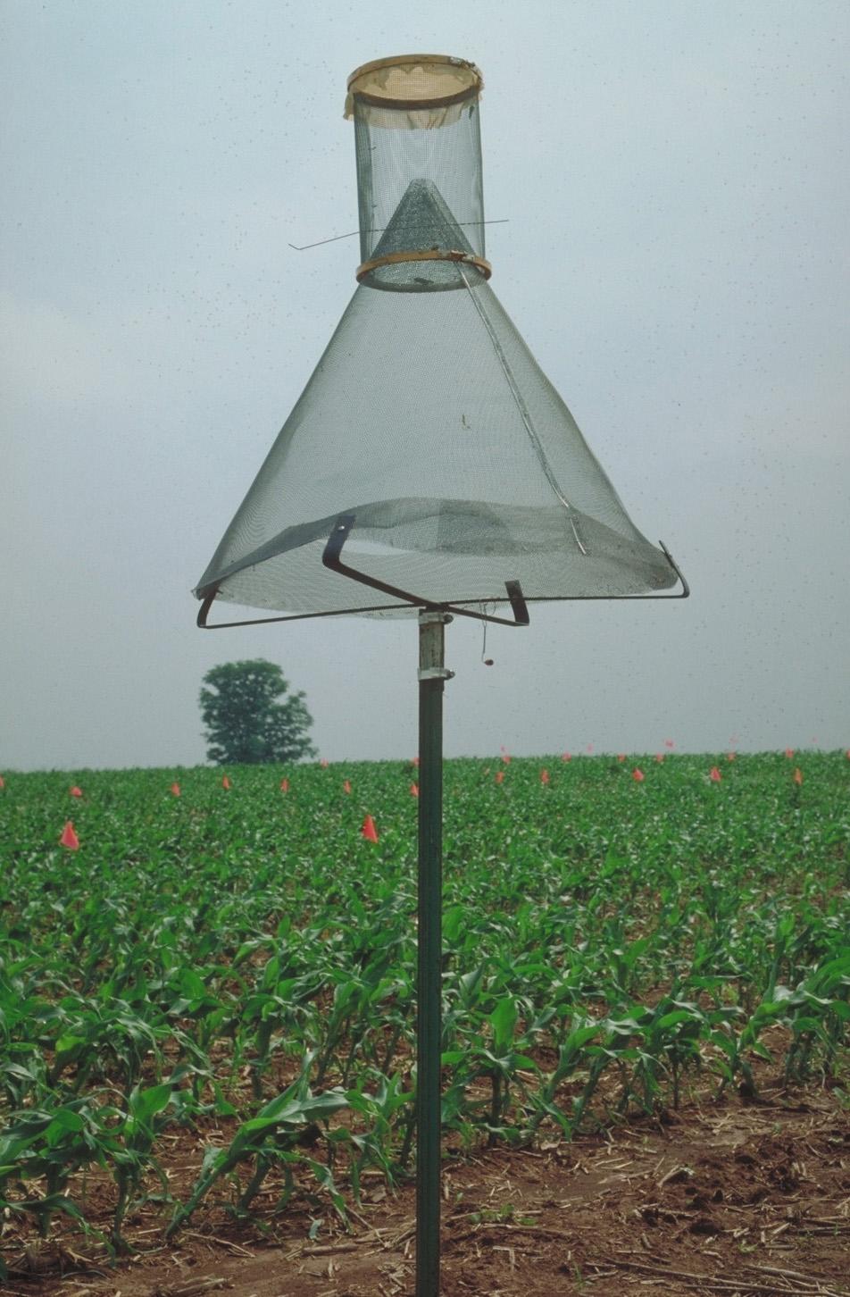 Corn Earworm Risk | Kentucky Pest News