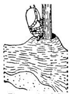 "Figure 2. Common chigger bite sites (Photo from ""The Bed Bugs Handbook"")"