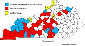 Figure 1. Palmer amaranth and waterhemp distribution in Kentucky (August 2015)