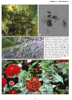 Figure 2. Large, colorful images illustrate the life cycles of selective organisms that represent different pathogen types. This page from the manual depicts signs and symptoms of powdery mildew.