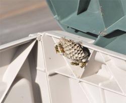 Figure 4. European paper wasp nest in outdoor storage chest (Photo: Lee Townsend, UK).