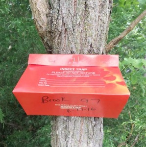 Figure 1. Gypsy moth survey traps will be orange or green in 2016 (Photo: B. Sears, Madison County, Kentucky)