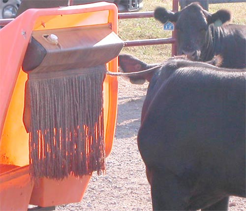 Late Summer Cattle Fly Check Can Catch Control Breakdown