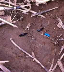 Slug dead & pellet Fig 2
