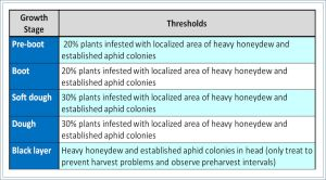 Table 2. Threshold levels for sugarcane aphid based on the percentages of plants infested, honeydew levels, and the growth stage of the plant.