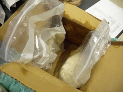 Figure 1: Spaghetti squash packaged in plastic bags decayed during shipping and cannot be diagnosed. (Photo: Brenda Kennedy, UK)