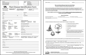 Figure 7: The sample submission form (left) and subsequent form for tree and shrub samples (right), should be filled out with as much information as possible. (Photo: UK Plant Disease Diagnostic Laboratories)