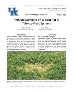 ppfs-ag-t-01-pythium
